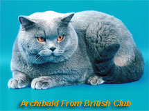 Archibald From British Club