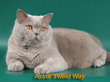Assol Sweet Way